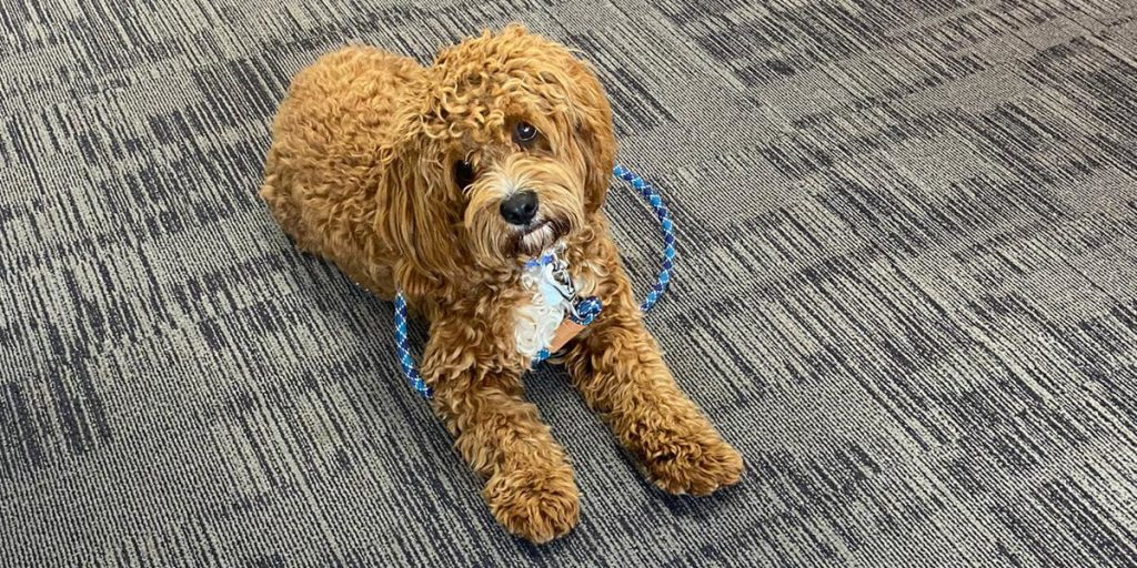 Office dog Rocco